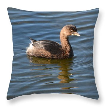 Pied Billed Grebe Throw Pillow by Dan Williams