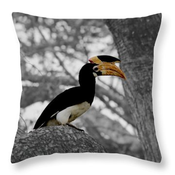 Pied Hornbill Throw Pillow by Ramabhadran Thirupattur