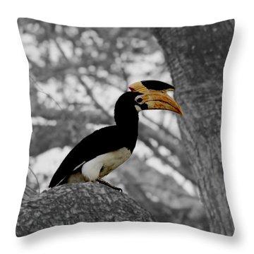 Throw Pillow featuring the photograph Pied Hornbill by Ramabhadran Thirupattur