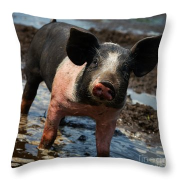 Pig In The Mud Throw Pillow by Nick  Biemans
