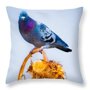 Pigeon On Sunflower Throw Pillow