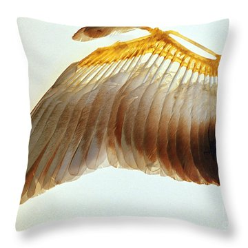 Pigeon Wing Throw Pillow by Biophoto Associates
