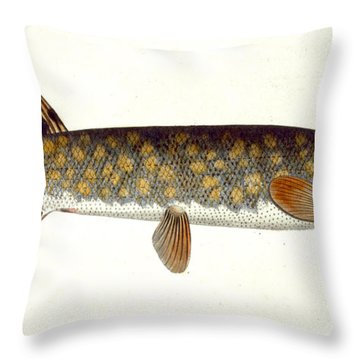 Pike Throw Pillow by Andreas Ludwig Kruger