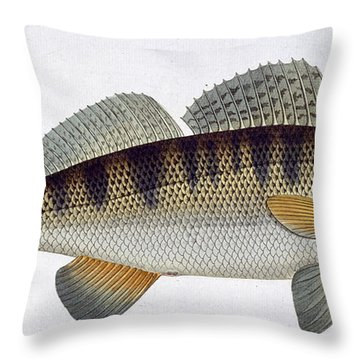 Pike Perch Throw Pillow by Andreas Ludwig Kruger