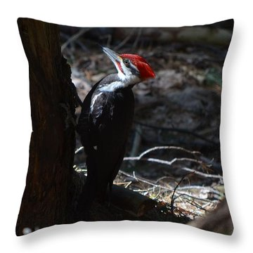 Pileated Woodpecker Throw Pillow by James Petersen