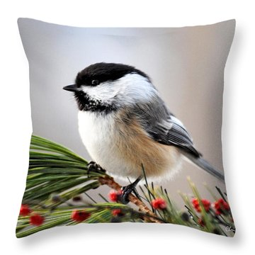 Pine Chickadee Throw Pillow by Christina Rollo
