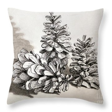 Pine Cone Trio Throw Pillow