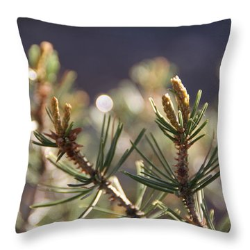 Throw Pillow featuring the photograph Pine by David S Reynolds