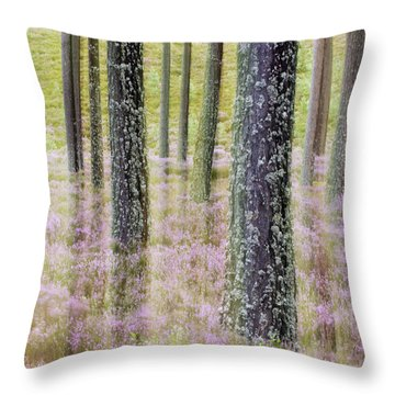 Pine Forest And Heather Cairngorms Np Throw Pillow