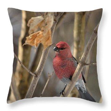 Throw Pillow featuring the photograph Pine Grosbeak by David Porteus