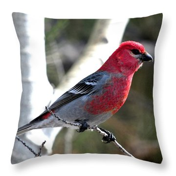 Pine Grosbeak Throw Pillow by Marilyn Burton