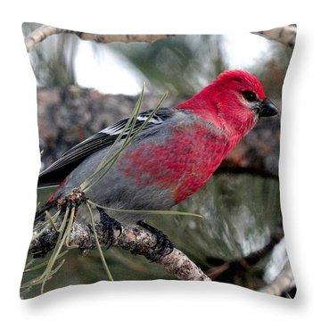 Pine Grosbeak On Ponderosa Pine Tree Throw Pillow