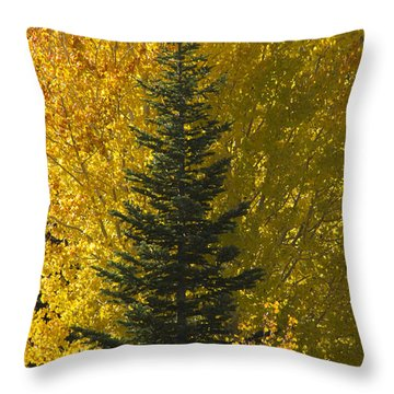 Pine In Aspens Throw Pillow