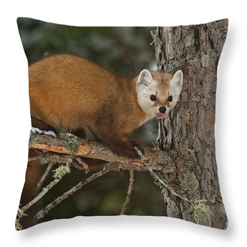 Throw Pillow featuring the photograph Pine Marten by Michael Cummings