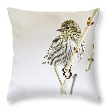 Pine Siskin Throw Pillow
