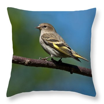 Pine Siskin Perched On A Branch Throw Pillow by Jeff Goulden