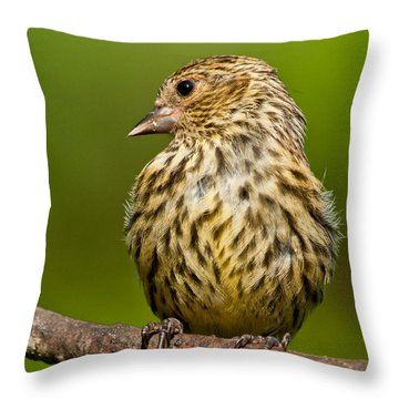 Pine Siskin With Yellow Coloration Throw Pillow by Jeff Goulden