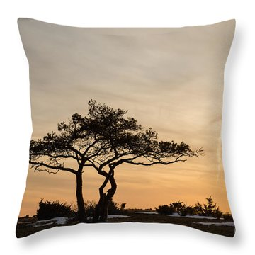 Pine Tree Portrait Throw Pillow