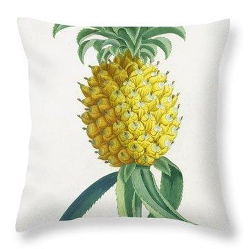 Pineapple Engraved By Johann Jakob Haid Throw Pillow by German School