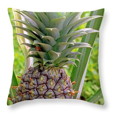 Pineapple Plant Throw Pillow by Millard H. Sharp