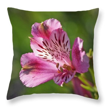 Pink Alstroemeria Flower Throw Pillow by Rona Black