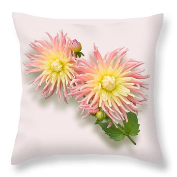 Pink And Cream Cactus Dahlia Throw Pillow by Jane McIlroy