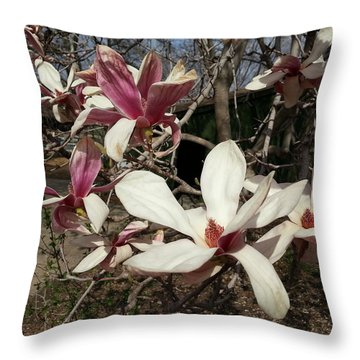 Throw Pillow featuring the photograph Pink And White Spring Magnolia by Caryl J Bohn