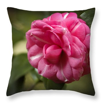 Throw Pillow featuring the photograph Pink And White Stripped Camellia by Penny Lisowski