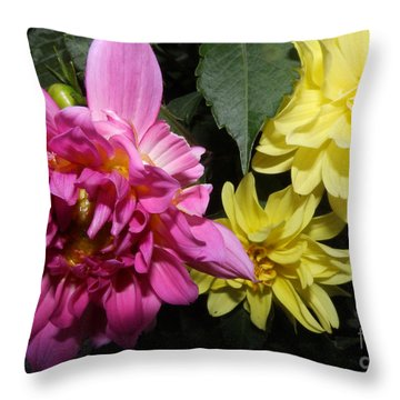 Pink And Yellow Dahlia's Opening No. Cc62 Throw Pillow