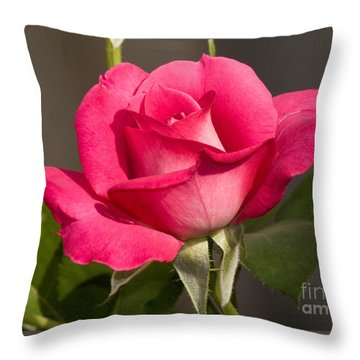 Throw Pillow featuring the photograph Pink Beauty Rose by Debby Pueschel