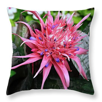 Pink Bromeliad Throw Pillow by Andee Design