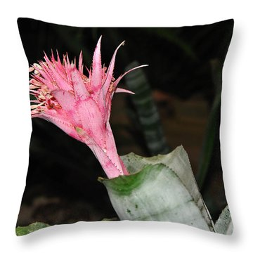 Pink Bromeliad Bloom Throw Pillow by Kaye Menner