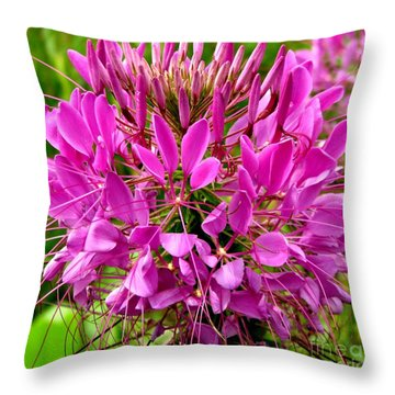 Pink Cleome Flower Throw Pillow by Rose Santuci-Sofranko