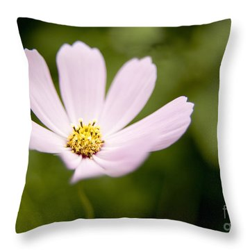 Pink Coreopsis Daisy Throw Pillow
