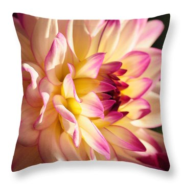 Throw Pillow featuring the photograph Pink Cream And Yellow Dahlia by Olivia Hardwicke