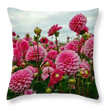 Pink Dahlia Field Throw Pillow