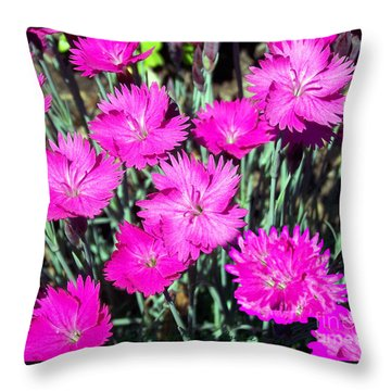 Throw Pillow featuring the photograph Pink Daisies by Gena Weiser