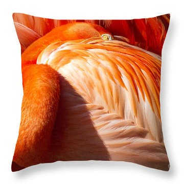 Pink Florida Flamino Resting Throw Pillow by Darleen Stry