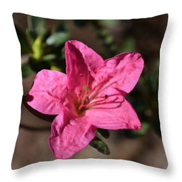 Throw Pillow featuring the photograph Pink Flower by Tara Potts