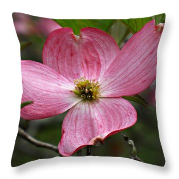 Pink Flowering Dogwood Throw Pillow by William Tanneberger