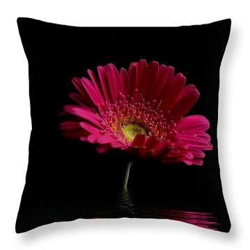 Pink Gerbera Flood 1 Throw Pillow by Steve Purnell