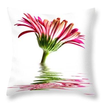Pink Gerbera Flood 2 Throw Pillow by Steve Purnell