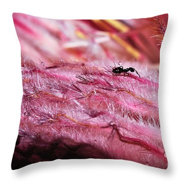Pink Ice Protea Macro With Ant Throw Pillow by Kaye Menner