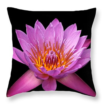 Throw Pillow featuring the photograph Pink Lady On Black by Judy Vincent