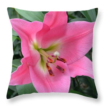 Throw Pillow featuring the photograph Pink Lily by Jeannie Rhode