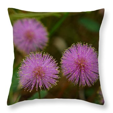 Pink Mimosa Throw Pillow by Kim Pate