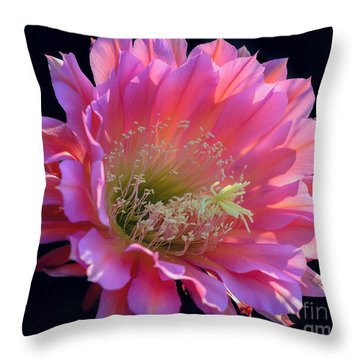 Pink Night Blooming Cactus Flower Throw Pillow