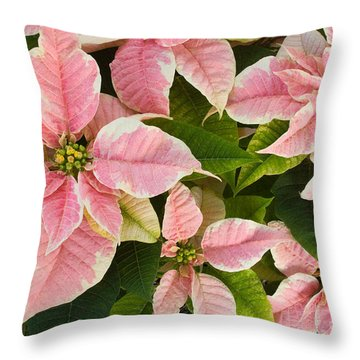 Throw Pillow featuring the photograph Pink Poinsettias Flowers by Chris Scroggins
