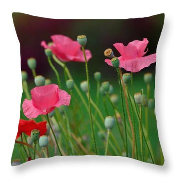 Pink Poppies Throw Pillow by Kathy King