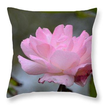 The Last Rose Throw Pillow by Debra Martz